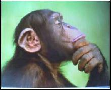 The Pondering Primate