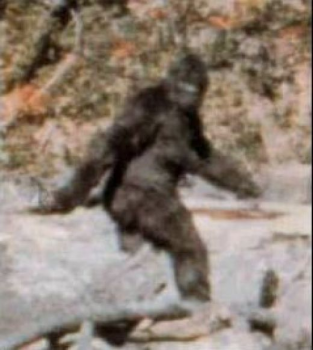 Frame from the Patterson-Gimlin film